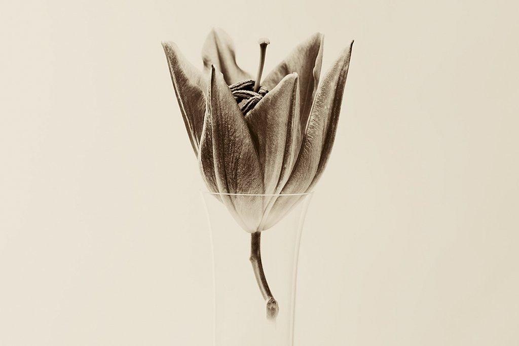folio_nature-silencieuse